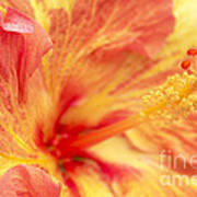 Hibiscus Art Print by Tony Cordoza
