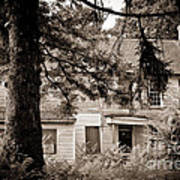 Hidden Behind The Pines Art Print by Colleen Kammerer