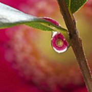Hidden Droplet Art Print