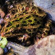 Hidden In The Rocks Art Print