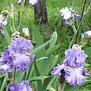 Hidden Iris Art Print