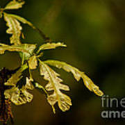 Hidden Leaves With A Green Back Ground Art Print by Robert D  Brozek