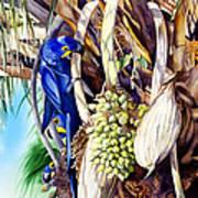 Hide-n-seek Hyacinths Art Print