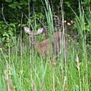 Hiding Deer Art Print