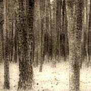Hiding In The Trees By Diana Sainz Art Print