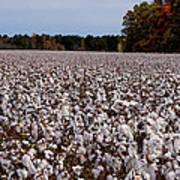 High Cotton Art Print