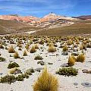 High In The Chilean Altiplano Art Print