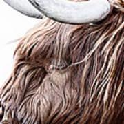 Highland Cow Color Art Print by John Farnan