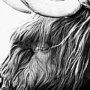 Highland Cow Mono Art Print by John Farnan