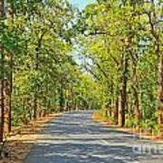 Highway In The Forest Art Print