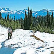 Hiking In Spring In Revelstoke National Park-british Columbia  Art Print