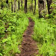 Hiking Through The Blue Ridge II Art Print