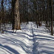 Hiking Trail Shadows Art Print