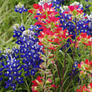 Hill Country Bloom Art Print