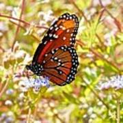 Hill Country Butterfly Art Print