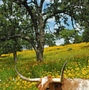 Hill Country Longhorn Art Print