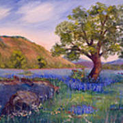 Hill Country Spring Art Print