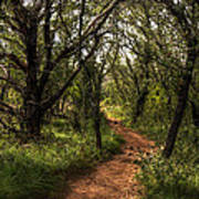 Hill Country Trail Art Print