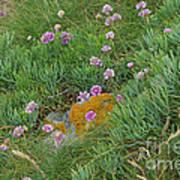Hillside Of Wildflowers Art Print