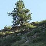 Hillside Scenery With White Tail Buck. Art Print