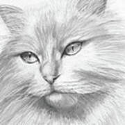 Himalayan Cat Art Print