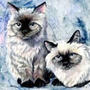 Himalayan Duo Art Print