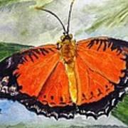 Himalayan Red Lacewing Art Print
