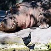 Hippo And Friend Art Print