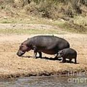 Hippo Mum And Calf Art Print