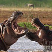 Hippo Threat Display Art Print