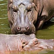 Hippopotamus In Water Art Print