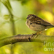 His Eye Is On The Sparrow Art Print