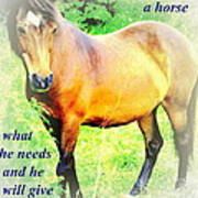 Care About A Horse And He Will Give You His Heart In Return  Art Print