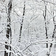 Hoar Frost Covered Trees In Forest Art Print
