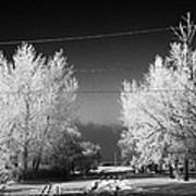 hoar frost covered trees on street in small rural village of Forget Saskatchewan Canada Art Print
