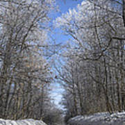 Hoar Frost On Campground Road Art Print