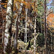 Hocking Hills Trees Art Print
