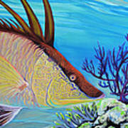 Hogfish Art Print