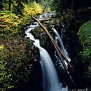 90122 Hoh Rainforest Art Print