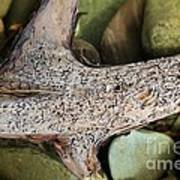 Holey Driftwood Art Print