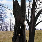 Holey Tree Trunk Art Print