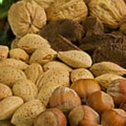 Holiday Nuts Art Print