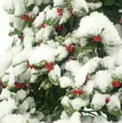 Holly Tree With Snow Art Print