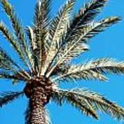 Hollywood Palm Art Print