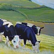 Holstein Friesian Cows Art Print