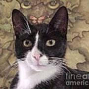 Homeless Kitty To Super Model Art Print by Robert Stagemyer