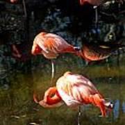 Homosassa Springs Flamingos 5 Art Print