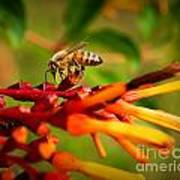 Honey Bee Profile Art Print