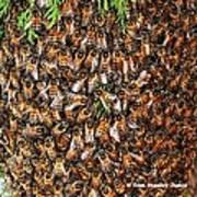 Honey Bee Swarm Art Print