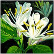 Honey Suckle Blossoms Art Print